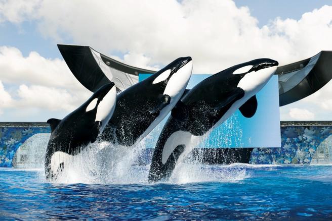 海洋主题黑板报蓝鲸
